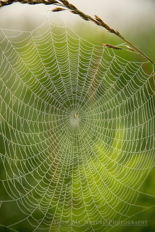 Orb spider web on a prairie