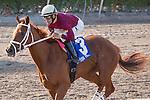 March 21, 2015: Sheer Drama ridden by jockey Joe Bravo and trained by David Fawkes win the Royal Delta Stakes (G2) at Gulfstream Park, Hallandale Beach (FL). Arron Haggart/ESW/CSM