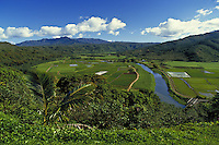 Hanalei valley and river,  traditional taro agriculture feilds, Kauai, Hawaii