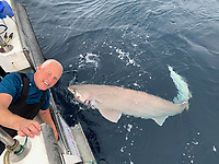 BNPS.co.uk (01202 558833)<br /> Pic: Kevin McKie/BNPS<br /> <br /> Pictured: Tommy Dunford with a catch.<br /> <br /> A British fishing party has caught a record number of a rarely seen species of shark that pre-date dinosaurs.<br /> <br /> The group reeled in 14 monster sixgill sharks in one day in a secret area of the north Atlantic dubbed Jurassic Park because it is inhabited by the pre-historic fish.<br /> <br /> The sharks weighed up to 450lbs (32st) each and it took an average of 40 minutes to reel in each one.<br /> <br /> The sixgill shark - Hexanchus griseus in Latin - spends much of its time in deep water and as a result has little interaction with humans, with only one reported attack in 500 years.