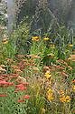 Uprising show garden, designed by Daniel Shea, Hampton Court Flower Show 2012. Plants include Achillea, Lilies, Heleniums, and grasses.