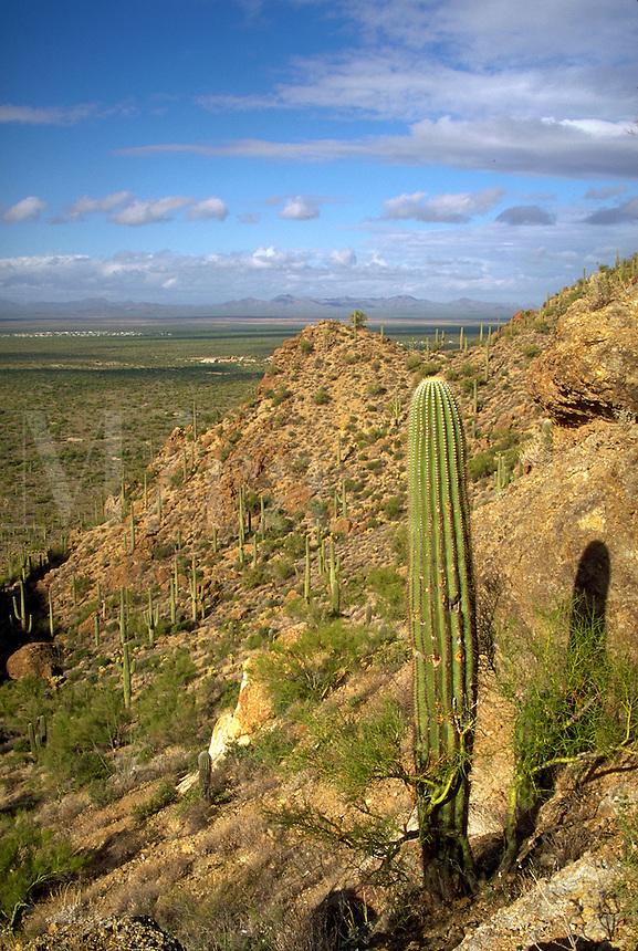 View of Tucson Mountain Park from Gates Pass. Sagauro cacti and paloverde shrubs,. Tucson Arizona USA.