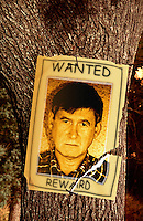 A poster of a wanted man nailed to an oak tree. Digital composite