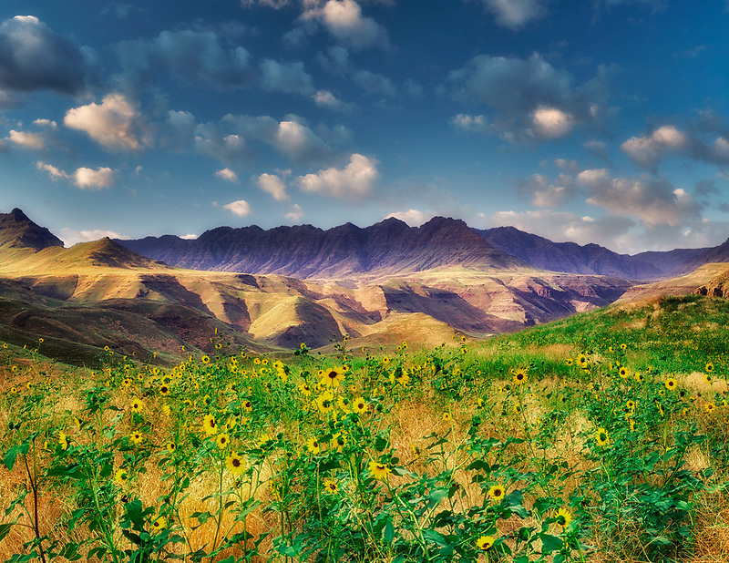 Storm clouds and daisies. Hells Canyon National Recreation Area. Oregon.
