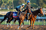 ARCADIA, CA  OCTOBER 25: Breeders' Cup Sprint entrant Mitole, trained by Steven M. Asmussen, exercises in preparation for the Breeders' Cup World Championships at Santa Anita Park in Arcadia, California on October 25, 2019.  (Photo by Casey Phillips/Eclipse Sportswire/CSM)