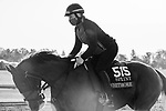 November 3, 2020: Whitmore, trained by trainer Ron Moquett, exercises in preparation for the Breeders' Cup Sprint at Keeneland Racetrack in Lexington, Kentucky on November 3, 2020. Gabriella Audi/Eclipse Sportswire/Breeder's Cup/CSM