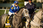 HALLANDALE FL - FEBRUARY 27: Mohaymen #6, ridden by Junior Alvarado in the post parade before the Xpressbet.com Fountain of Youth Stakes at Gulfstream Park on February 27, 2016 in Hallandale, Florida.(Photo by Alex Evers/Eclipse Sportswire/Getty Images)