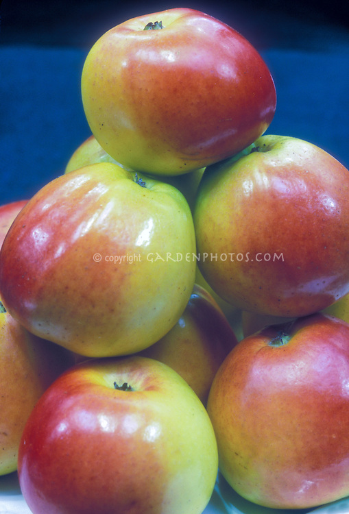 Apples Anna Malus domestica, an Israeli-bred variety introduced in 1959, heirloom apple, great for fresh eating.