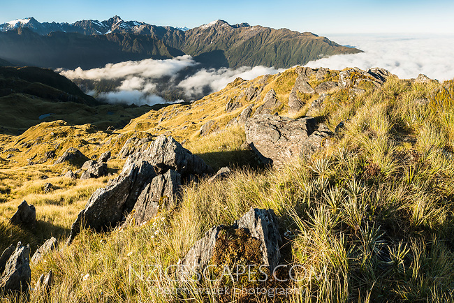 Alpine vistas from Mt. Fox in Southern Alps , Westland Tai Poutini National Park, West Coast, UNESCO World Heritage Area, New Zealand, NZ