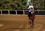 ARCADIA, CA - APRIL 07:  Mike Smith celebrates after winning the Santa Anita Derby  aboard Justify #6 at Santa Anita Park on April 07, 2018 in Arcadia, California.(Photo by Alex Evers/Eclipse Sportswire/Getty Images)