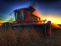 Farmer harvest soybeans from a section of Yarnell Farm land along Cleveland Ave.