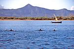 Boat & Spinner Dolphin