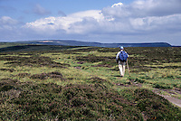 Wales, Offa's Dyke Footpath.   Hiker on the Hatterrall Ridge, near Llanthony.
