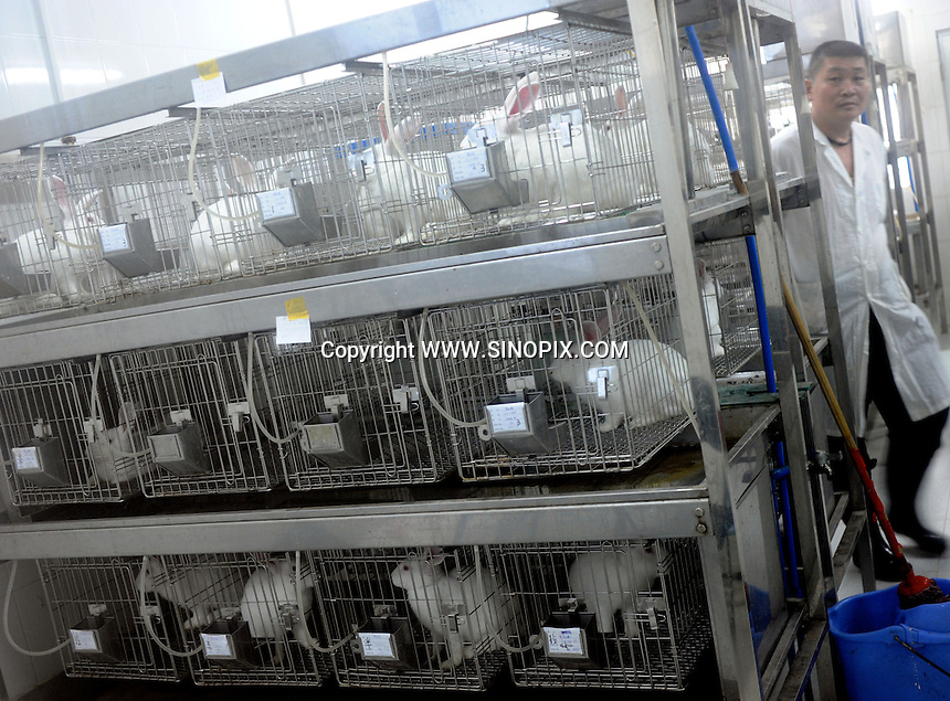 Guangzhou Sun Yat-Sen University (also known as Zhongshan University in manderain) Experimental Animal Lab in Guanzhou, China.<br /><br />Photo by Richard Jones / Sinopix