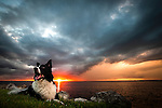 Dixie, the border collie, lays in the grass by Oyster Bay in Wakulla County, FL at sunset.<br /> ©2013 Mark Wallheiser