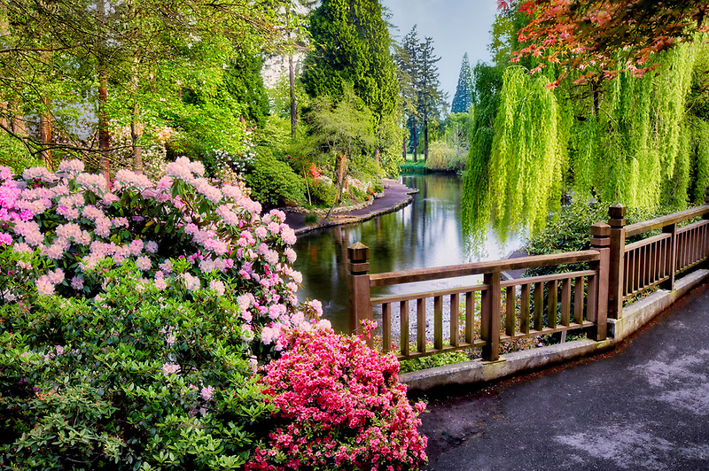 Pond and geese with bloominmg rhododendrons at Crystal Gardens. Portland. Oregon