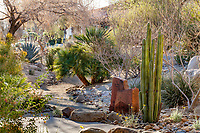 Pachycereus marginatus, Mexican fencepost cactus; in resilient, drought tolerant summer-dry demonstration garden designed for rainwater capture, percolation, and harvesting as dry desert stream arroyo at Palm Springs Art Museum in Palm Desert, California