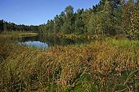Haspelmoor, Haspel-Moor, Moorweiher, Tümpel, Naturschutzgebiet, Bayern, Deutschland