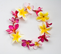 Plumerias arranged in a circle layout for graphics use