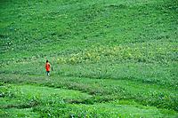Boy catching butterflies in green field.