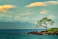 Lone tree and ocean at sunset. Maui, Hawaii