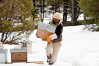 Beekeeper Amanda Dowd carries a 'ruchette', a half-sized beehive, to her car during transhumance of her honeybees down to lower altitude spring pastures, Seranon, Alpes Maritimes, France, 18 February 2014.
