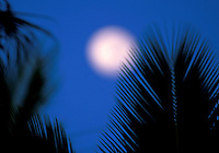 Palm trees with moon in background