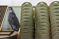 United Arab Emirates (UAE). Dubai. Al Ruwayyah desert area. Organised jointly by the Hamdan Bin Mohammed Center for the Revival of Heritage (HHC) and Abu Dhabi Falconers Club, the UAE Falconers League has a total of nine rounds that ran until February 19 between Dubai and Abu Dhabi. A picture of a falcon and a stack of chairs. Falcons are birds of prey in the genus Falco, which includes about 40 species. Adult falcons have thin, tapered wings, which enable them to fly at high speed and change direction rapidly. Additionally, they have keen eyesight for detecting food at a distance or during flight, strong feet equipped with talons for grasping or killing prey, and powerful, curved beaks for tearing flesh. The United Arab Emirates (UAE) is a country in Western Asia at the northeast end of the Arabian Peninsula. 16.02.2020  © 2020 Didier Ruef