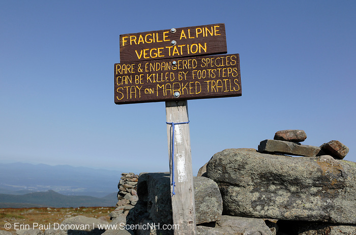Fragile alpine vegetation sign on te summit of Mount Moosilauke in the New Hampshire White Mountains town of Benton, New Hampshire during the summer months. The scenic Appalachian Trail travels over this mountain.
