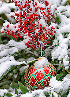 Christmas tree ornament in snow covered bush with red berries.