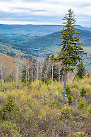West Virginia Scenic Overlook, State Highway 150, showing new growth after clear cutting of forest. Late spring.