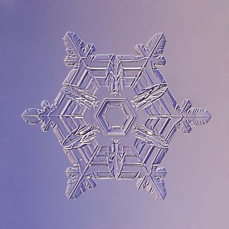 Snowflake Procyon - Stellar Plate Snowflake