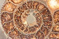 A close view by macro of the central part of a fossil shell, probably an ammonite, with its characteristic spiral pattern (Rome, 2020).<br /> <br /> Una dettagliata immagine con il macro della parte centrale di una conchiglia fossile, probabilmente un'ammonite, con il suo caratteristico disegno a spirale (Roma, 2020).
