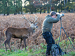 Oh deer..... Its beHIND you!! By Roger Clark