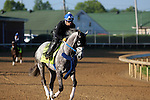LOUISVILLE, KY - APRIL 24: Creator (Tapit x Morena, by Privately Held) gallops on the track, ridden by exercise rider Abel Flores at Churchill Downs, Louisville KY, in preparation for the Kentucky Derby. Owner WinStar Farm LLC, trainer Steven M. Asmussen. (Photo by Mary M. Meek/Eclipse Sportswire/Getty Images)