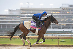 November 1, 2018: La Pelosa (IRE), trained by Charlie Appleby, exercises in preparation for the Breeders' Cup Juvenile Fillies Turf at Churchill Downs on November 1, 2018 in Louisville, Kentucky. Jamey Price/Eclipse Sportswire/CSM