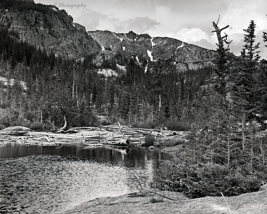 """Drift Wood at the Mills"",<br />
