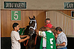 25 May 2009 : Dubai Majesty gets saddled in the paddock before the 6th running of the G3 Winning Colors stakes at Churchill Downs in Louisville, Kentucky.