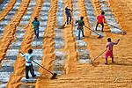 Workers dry rice by Avishek Das