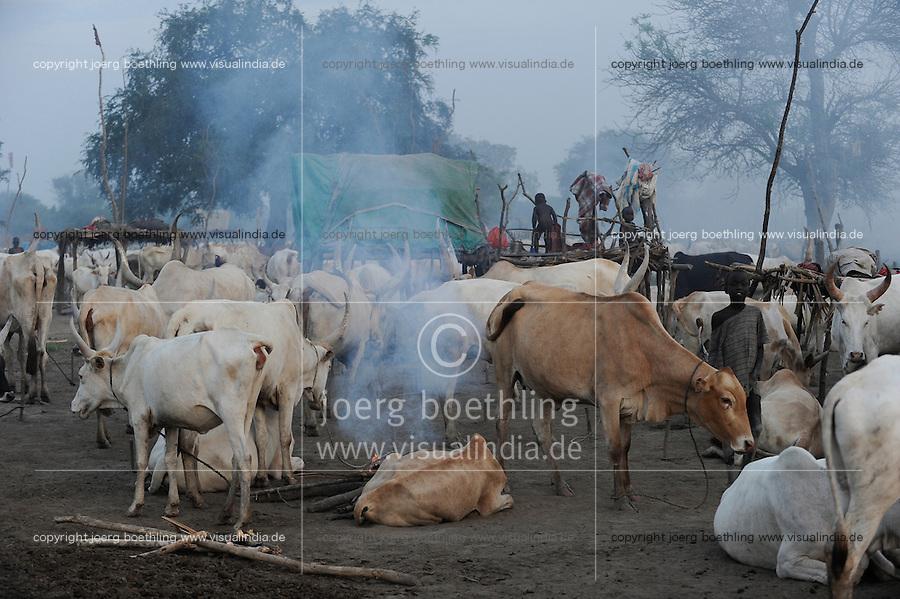 Afrika SUED-SUDAN  Bahr el Ghazal region , Lakes State, Dinka Hirten mit Zeburindern im cattle camp    .Africa SOUTH SUDAN  Bahr al Ghazal region , Lakes State, Dinka shepherd with Zebu cow in cattle camp