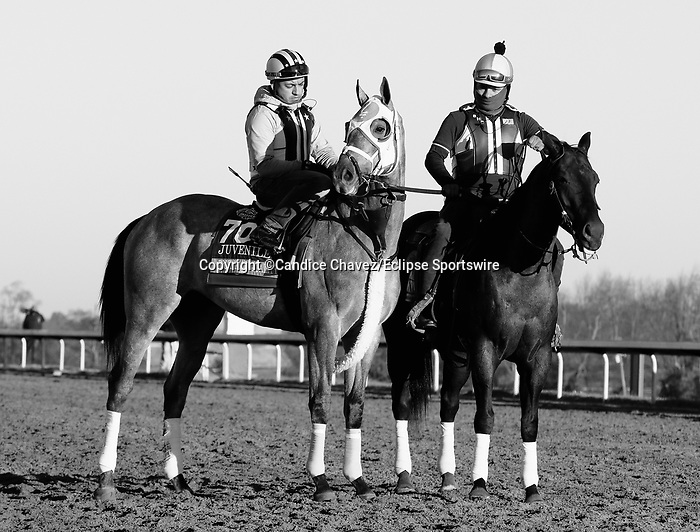 Essential Quality, trained by trainer Brad Cox, exercises in preparation for the Breeders' Cup Juvenile at Keeneland Racetrack in Lexington, Kentucky on November 4, 2020.