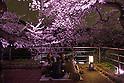 Cherry blossom season in Tokyo 2016