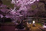 People enjoy cherry blossom viewing at Chidorigafuchi moat in Tokyo, Japan, April 5, 2016.  (Photo by Yuriko Nakao/AFLO)