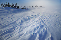 WAPUSK NATIONAL PARK, MANITOBA<br /> Eiskalter Wind modelliert dir  gefroreme Tundra<br /> Icy-cold winds and snow drift  form a new shape of the frozen Tundra<br /> <br /> Full size: 69,2 MB