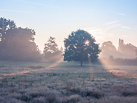 Shafts of light from a slowly rising sun pierce a solitary tree in a field at Sissinghurst Castle