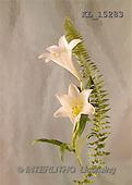 Interlitho, Erica, SYMPATHY, photos, sympathy, flowers(KL15283,#T#) Beileid, condolación