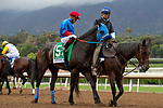 """ARCADIA, CA  SEPTEMBER 28:  <br /> #5 Mongolian Groom, ridden by Abel Cedillo, in the post parade of the Awesome Again Stakes (Grade l) """"Win and You're Breeders' Cup Classic Division"""" on September 28, 2019 at Santa Anita Park in Arcadia, CA.(Photo by Casey Phillips/Eclipse Sportswire/CSM)"""