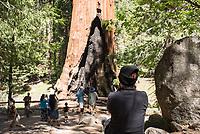 """Touristen vor dem """"Grizzly Giant""""-Mammutbaum im Kalifornischen Sequoia National Park. Der Baum ist ca. 2.700 Jahre alt.<br /> 6.6.2017, Sequoia National Park<br /> Copyright: Christian-Ditsch.de<br /> [Inhaltsveraendernde Manipulation des Fotos nur nach ausdruecklicher Genehmigung des Fotografen. Vereinbarungen ueber Abtretung von Persoenlichkeitsrechten/Model Release der abgebildeten Person/Personen liegen nicht vor. NO MODEL RELEASE! Nur fuer Redaktionelle Zwecke. Don't publish without copyright Christian-Ditsch.de, Veroeffentlichung nur mit Fotografennennung, sowie gegen Honorar, MwSt. und Beleg. Konto: I N G - D i B a, IBAN DE58500105175400192269, BIC INGDDEFFXXX, Kontakt: post@christian-ditsch.de<br /> Bei der Bearbeitung der Dateiinformationen darf die Urheberkennzeichnung in den EXIF- und  IPTC-Daten nicht entfernt werden, diese sind in digitalen Medien nach §95c UrhG rechtlich geschuetzt. Der Urhebervermerk wird gemaess §13 UrhG verlangt.]"""