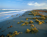 Padre Island, TX         © Terry Donnelly  /<br /> Morning light on the Texas Gulf Coast from barrier island beach with scattered shells and seaweed exposed at low tide