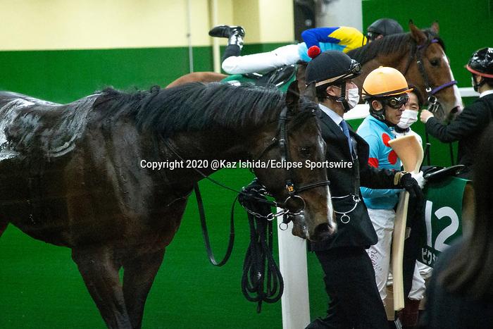 TOYOAKE,JAPAN-JAN 10: Pixie Knight,ridden by Yuichi Fukunaga, after winning the Shinzan Kinen at Chukyo Racecourse on January 10,2021 in Toyoake,Aichi,Japan. Kaz Ishida/Eclipse Sportswire/CSM